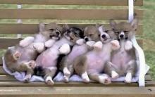 Como Treinar Seu Cachorro – Dicas, Lei 11.977 Proteção aos Animais