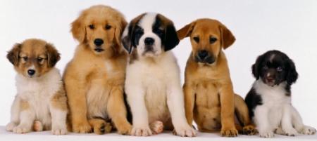 Hábitos Saudáveis Para Vida de Seu Cachorro – Dicas, Informações  (4)