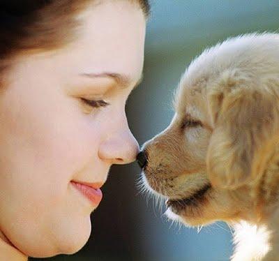 Hábitos Saudáveis Para Vida de Seu Cachorro – Dicas, Informações