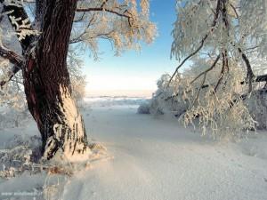 Paisagem-com-neve