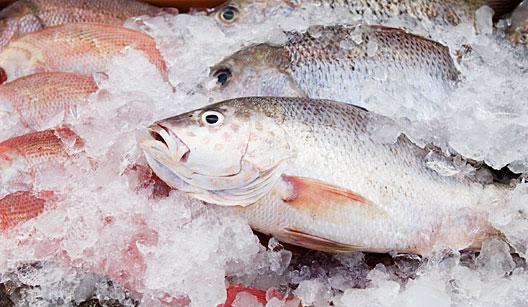 Peixe-como-escolher-cuidados-ao-comprar
