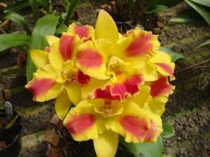 Como Cuidar de Orquídeas – Dicas, Informações  (1)