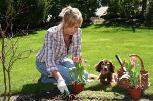 Como Cuidar de Orquídeas – Dicas, Informações  (3)
