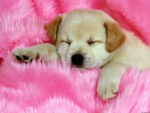 Revender Roupa de Cachorro – Onde Compra, Dicas, Modelos (2)