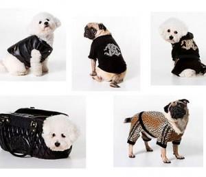 Revender Roupa de Cachorro – Onde Compra, Dicas, Modelos (4)