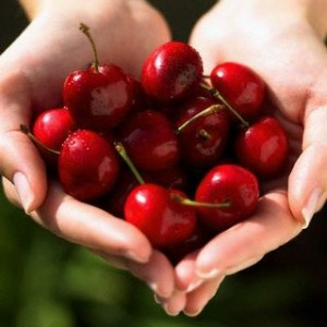 handful of vibrant, juicy cherries