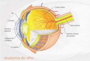 img_olho_detalhes_gde