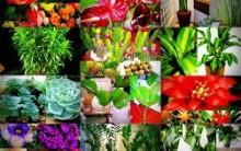 Plantas para Ambiente Fechados – Dicas e Modelos