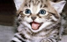 Doenças Transmitidas Pelo Gato – Quais São, Causa, Sintomas