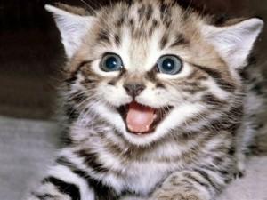 Doenças Transmitidas Pelo Gato – Quais São, Causa, Sintomas (1)