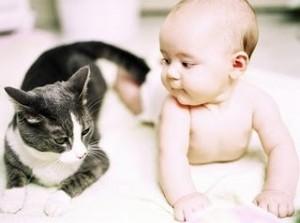 Doenças Transmitidas Pelo Gato – Quais São, Causa, Sintomas (4)