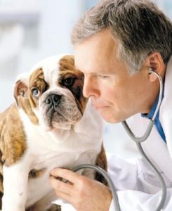 hospitais veterinarios 24 horas em sao paulo