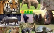 Zoológica de Sapucaia do Sul – Telefone e Endereço