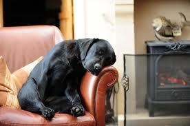 animal triste e solitario