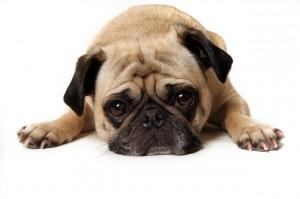 cachorro-triste-materia