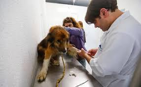 concurso medicina veterinaria
