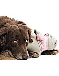 Gravidez Psicológica em Cachorros – Quais os Sintomas e Como Evitar