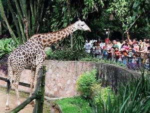 zoo-sampa