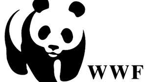 Bolsas de Estudos na WWF Para 2014 – Como Fazer as Inscrições Para Processo Seletivo