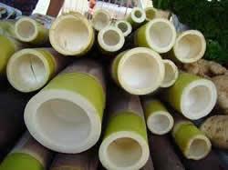 Benefícios-do-broto-de-bambu