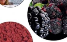 Farinha de Amora – Quais os Benefícios Que Traz ao Corpo