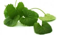 Chá de Centella Asiática Para Redução de Celulites – Como Funciona, Quais os Benefícios