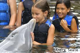 Mergulho com Golfinhos no Brasil