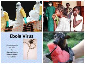 Virus Ebola -