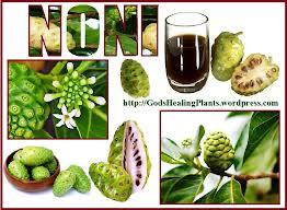 Noni Fruta Exótica