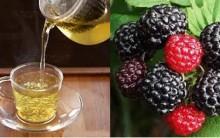 Chá de Amora Emagrece? Benefícios, Como Emagrecer, Receita do Chá, Emagrecer com Chá de Amora