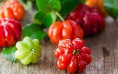 Chá de Pitanga Controla Diabetes – Receita e Benefícios